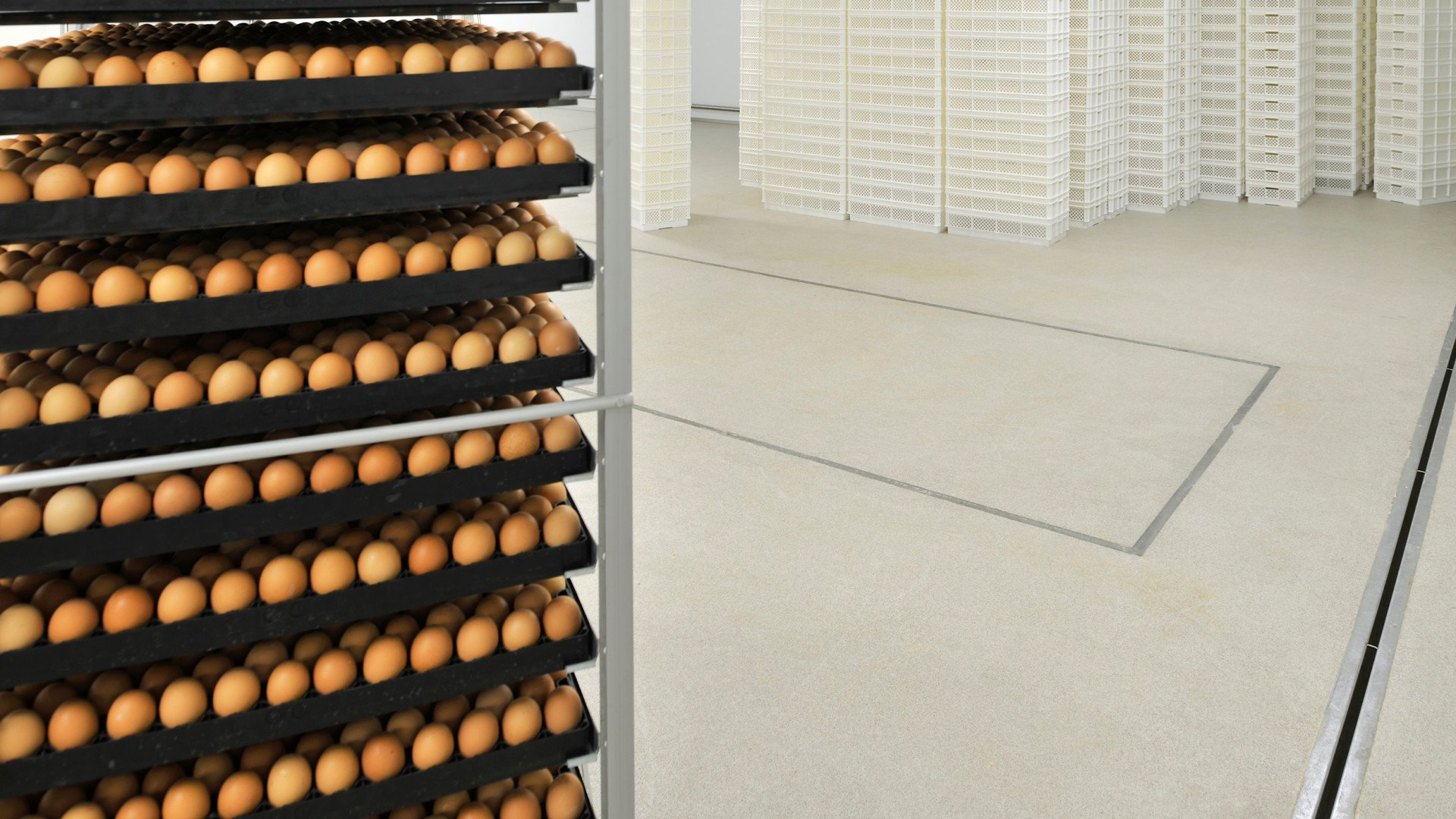poultry flooring systems - Pluriton Broederij Afferden Bolidtop 700